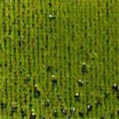 Moquette-FESTI-ETOILE-vert-or